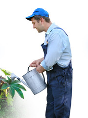 gardener - worker  watering plants