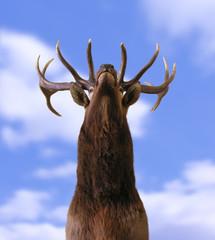 buck from below