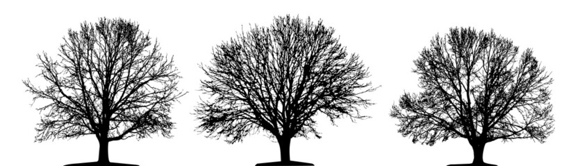 tree isolated