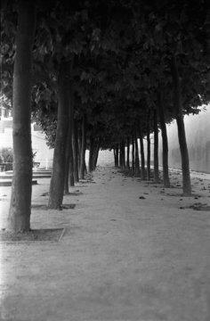 be046-001/ arbre