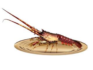 homard lobster