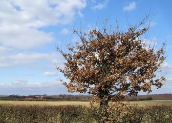 isolated bush 1