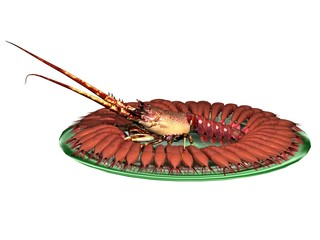 homard lobster