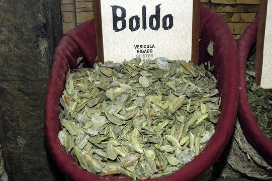 boldo-01