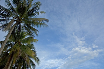 palms and sky background