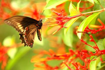 butterfly vivid