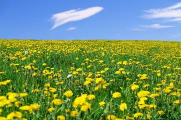 flores amarillas en la pradera