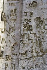 tree graffiti 3