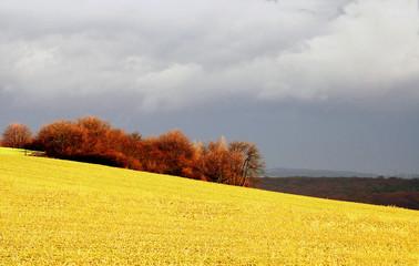 Papiers peints Orange paysage d'ici