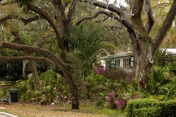 tropical plants and oaks