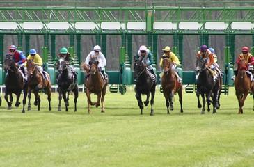 départ course de chevaux