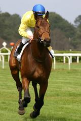 jockey et son cheval
