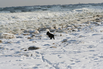smalll dog on the ice