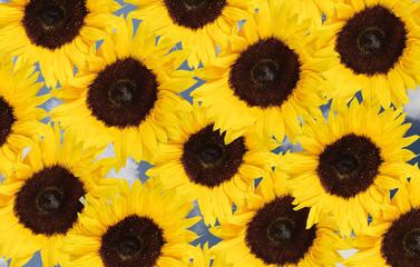 bouquet de tournesol