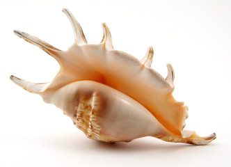 exotic shell