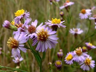 floral glade