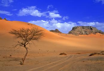 Foto auf Acrylglas Algerien sahara désert