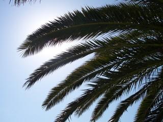 les plames au soleil
