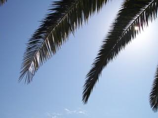 palmes en contre jour