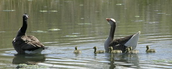 family outing 2