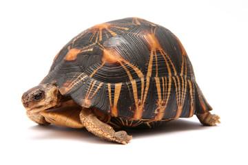 Papiers peints Tortue tortue