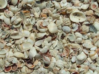 sea shell city