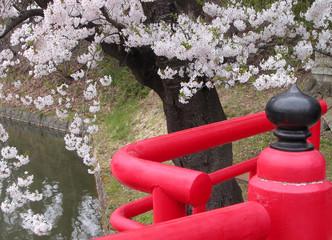 Fotorolgordijn Scooter japanese spring bridge