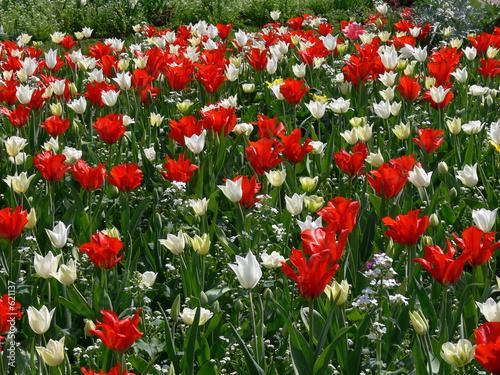 fleurs rouge et blanche