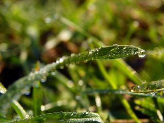 frozen grass at morning