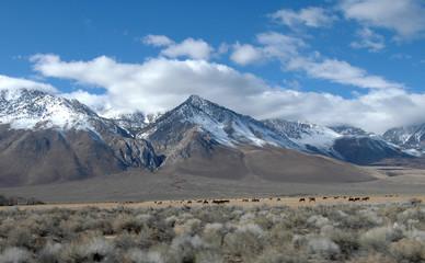 mammoth mountain area, ca