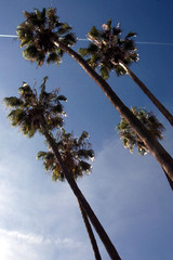 palms and bluw sky