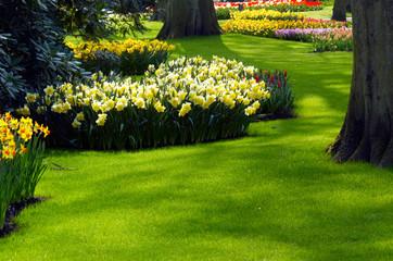 Foto op Plexiglas Tuin garden in spring