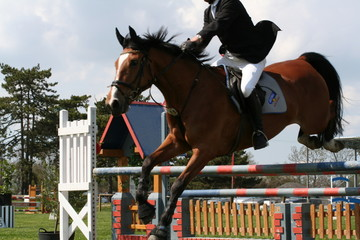cheval en plein saut d'obstacle
