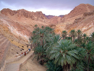Keuken foto achterwand Tunesië oasis túnez