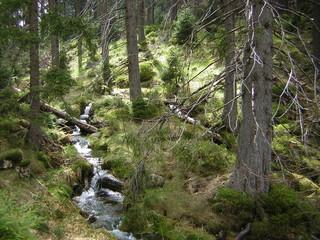 quellbach im nationalpark hochharz