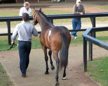 horse auction 2