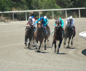 race horses in the turn