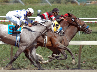 three racehorses in the stretch