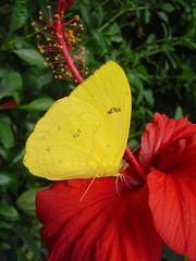 jaune et rouge