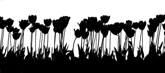 Photo sur Aluminium Floral noir et blanc tulip 2color black