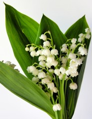 Wall Murals Lily of the valley posy of the spring lilies of the valley