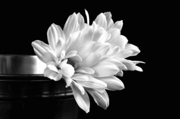 black and white sun