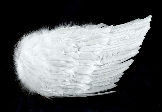 angel wings side view isolated on black