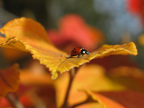 vibrant autumn leaves and a lady bug