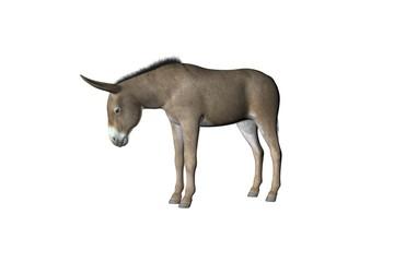 donkey two