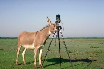 profi-fotograf