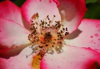 pink flower up close