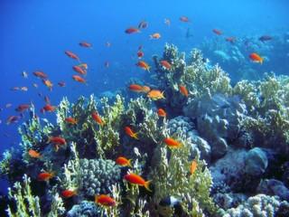 Keuken foto achterwand Koraalriffen life under water