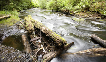gnat creek