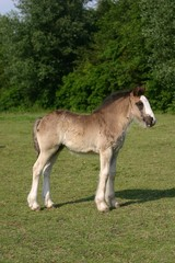 young horse standing